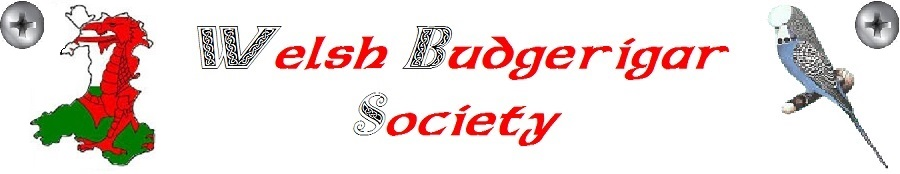 Welsh Budgerigar Society Logo